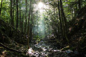Mosher Hill Falls