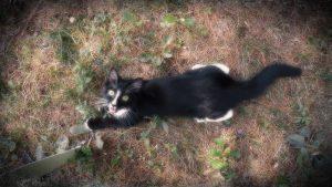 Ash, the crazy Kitten